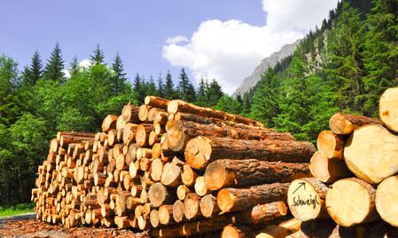 Holzinvestment Bäume
